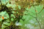 ENTREMELEMENTS   Le Groin à sa source, dans le Bugey près d'Artemare
