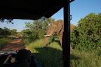 Elefanterne stak til gengæld ikke af ...
