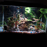 Fish - IMG_20121002_215811.jpg