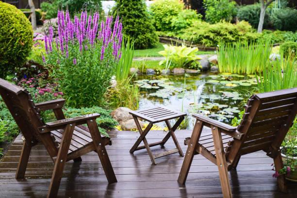 Tanaman Yang Hidup Didalam Air Untuk Taman Dirumah