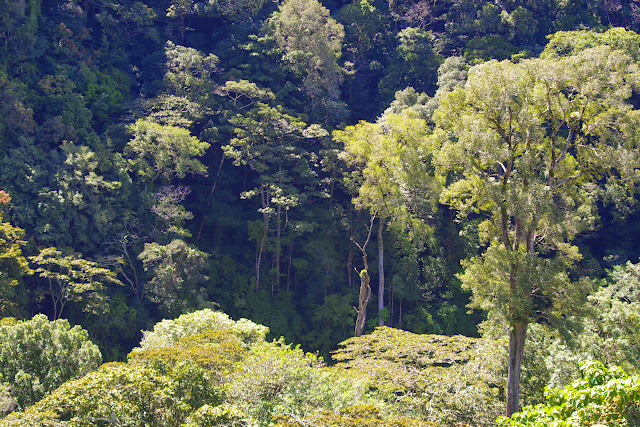 Mount Totumas, 1900 m (Chiriquí, Panamá), 23 octobre 2014. Photo : J.-M. Gayman