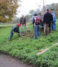 Photo: Zasadit pěkný dub vyžadovalo týmovou práci.