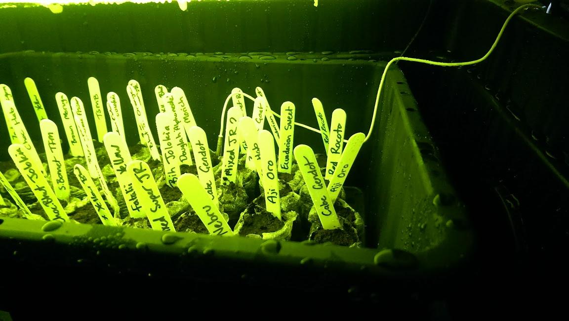 germination%252520chamber%252520again.jp