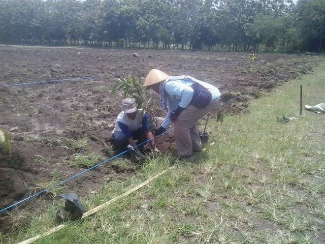 Penanaman bibit tanaman buah buahan di Wanadesa Slayur Caturharjo