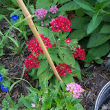 Gardening 2010, Part Three - 101_3750.JPG