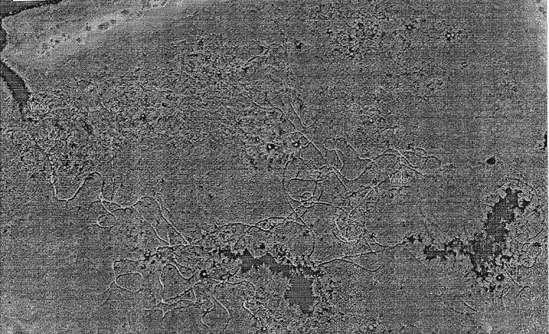 Геоглифи южного берега озера Балхаш 8