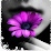 Cristen Whalen's profile photo