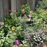 Gardening 2012 - IMG_3742.JPG