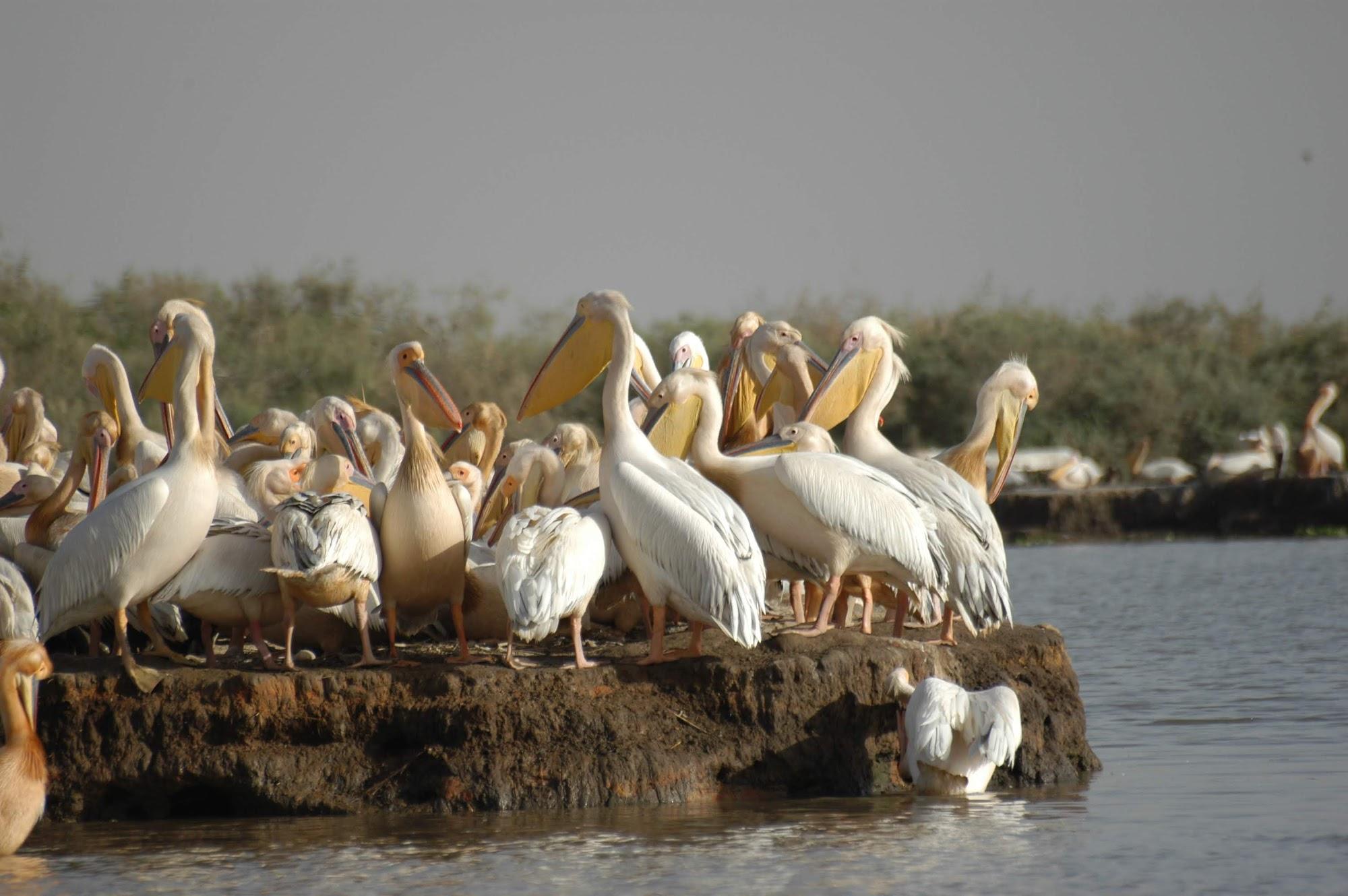 Reisinformatie Senegal