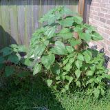 Gardening 2010, Part Two - 101_3109.JPG