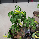 Gardening 2010, Part Three - 101_5040.JPG