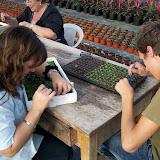 cultivo de plantas florales anuales - backup%2Bcamara%2B139.jpg