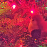 Christmas Lights - 115_9049.JPG