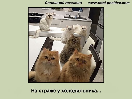 Коты сидят у холодильника
