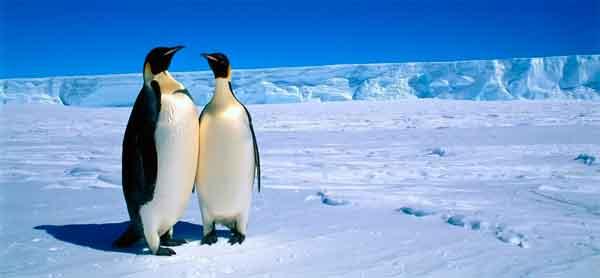 La Antártida pingüinos