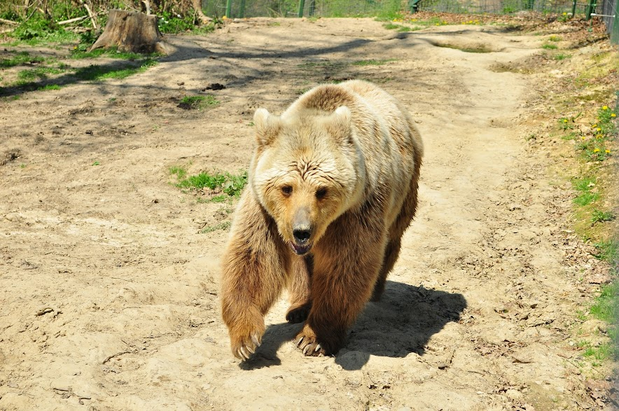 Rezervatia de ursi Zarnesti
