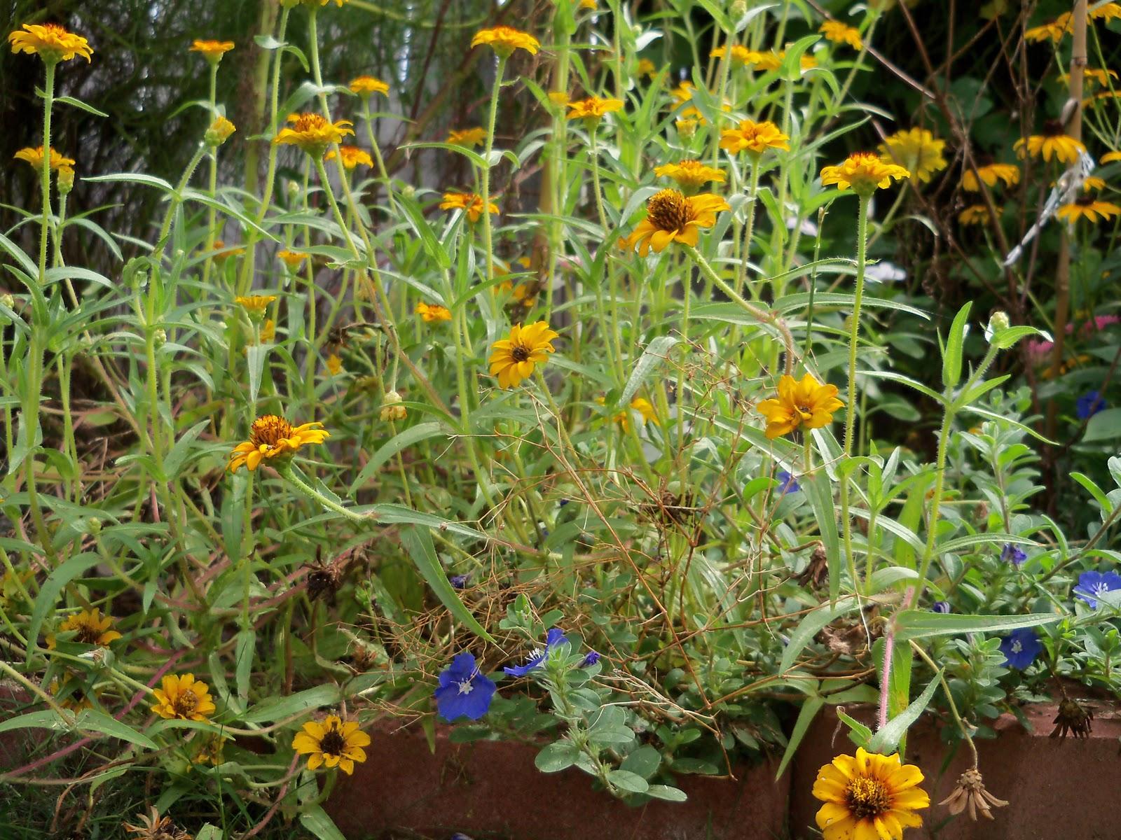 Gardening 2010, Part Three - 101_5207.JPG
