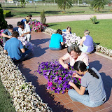 cultivo de plantas florales anuales - 100_0198.JPG