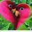 Doly Begum's profile photo