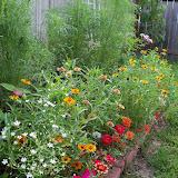Gardening 2010, Part Three - 101_3705.JPG