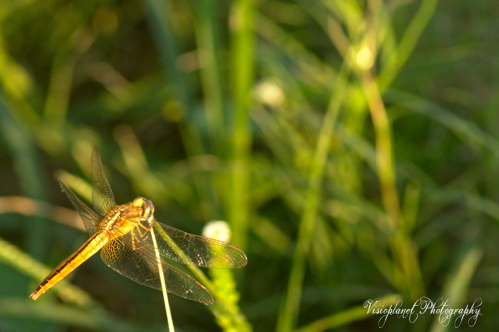 The grasseater by Sudipto Sarkar on Visioplanet