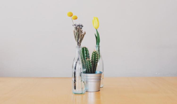 Decorar com flores e cactus