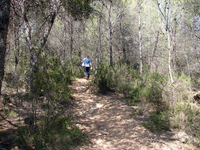 Sot de Ferrer SL CV 116 Cerro Serrabogar
