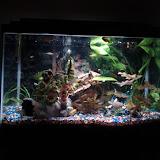 Fish - IMG_20121002_215742.jpg