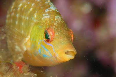 macro poisson