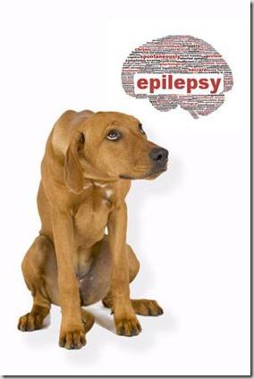 epilessia-cane