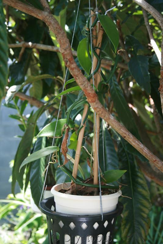 Futur jardin d'orchidées!!! - Page 2 IMG_3716