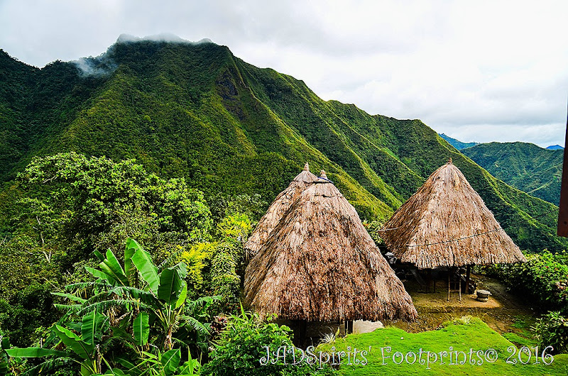 Clusters of three traditional Ifugao huts in Batad Rice Terraces