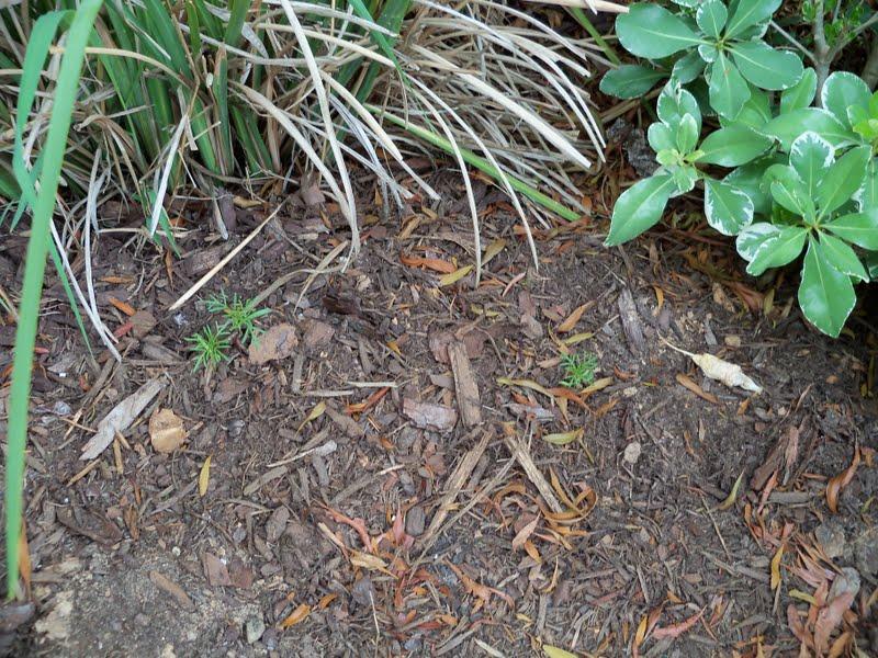 Gardening 2010 - 101_1140.JPG
