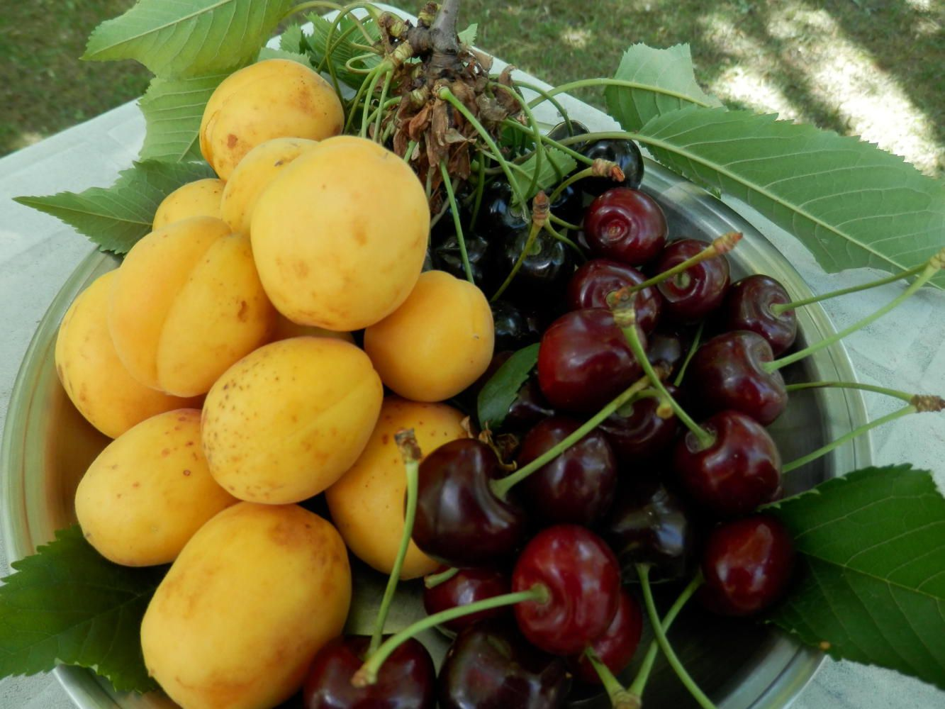 Fruits of Nagar