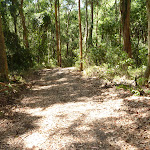 Forested trail near Lily Pond Picnic Area in Blackbutt Reserve (401113)
