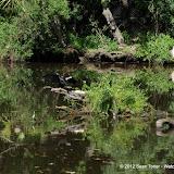 04-07-12 Homosassa Springs State Park - IMGP4524.JPG