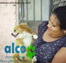 Campaña de asistencia en Mangomarca SJL (28)