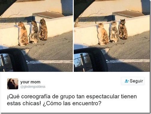 humor twits de gatos (13)