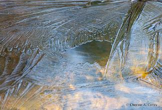 Photo: Ice feathers