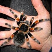 Что значит сон, если по телу ползает паук
