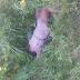 Encuentran mujer sin vida en el km 14 de la Autopista Duarte