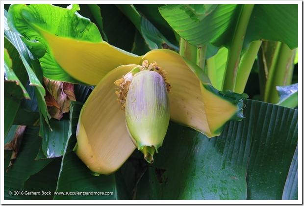 160906_Butchart_Gardens_0018