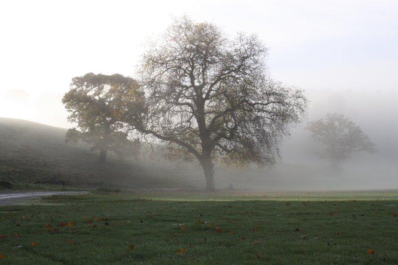 Newnham Park - November 2010