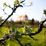 2015.04.23.,Klasztor wiosną,fot.H.L (5).jpg