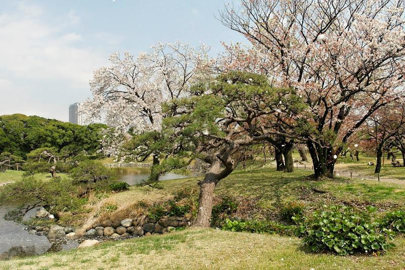 2014 Japan - Dag 11 - janita-SAM_6674.JPG