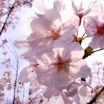 Flower 031_1280px.jpg