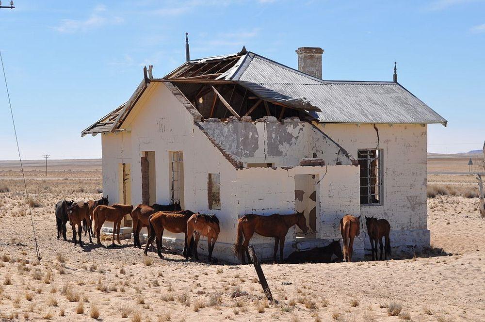 namib-desert-horse-1