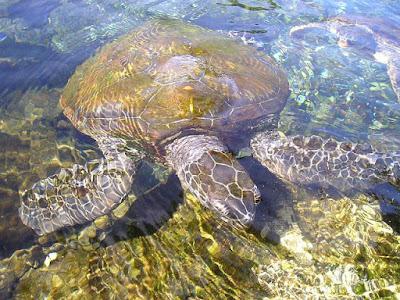 कछुओं के बारे में जानकारी व् रोचक तथ्य | Tortoise And Turtles About In Hindi