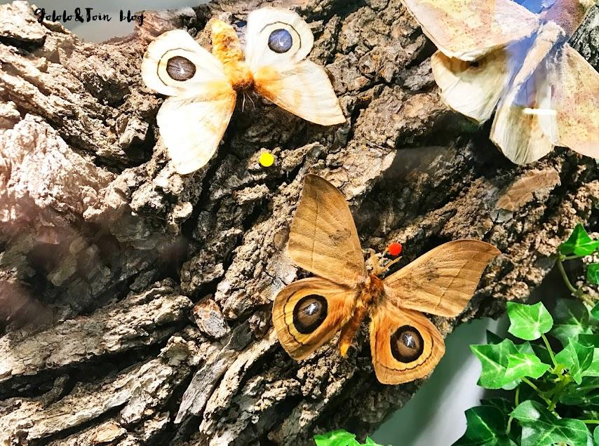 insectpark-mariposas-centro-naturaleza-museo-insectos-niños