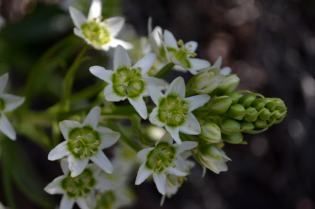close up on white flowers